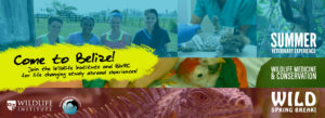 Summer Veterinary Experience in Belize