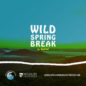 Wild Spring Break in Belize