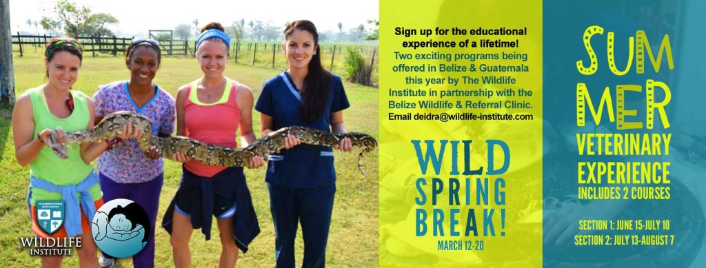 WI-summer-veterinary-experience-belize