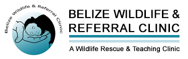 Belize Wildlife & Referral Clinic – BWRC